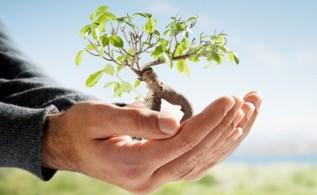 Взращивание дерева