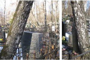 Деревья рядом с могилами