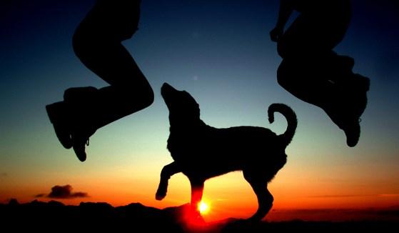 Собачка на закате
