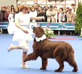 Собака танцует с человеком