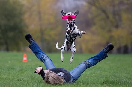Собака прыгает за тарелкой