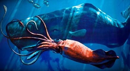 Борьба кита и кальмара